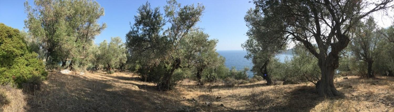 Auszeit auf Lesbos. Panteleon Oliven und Ägäis.
